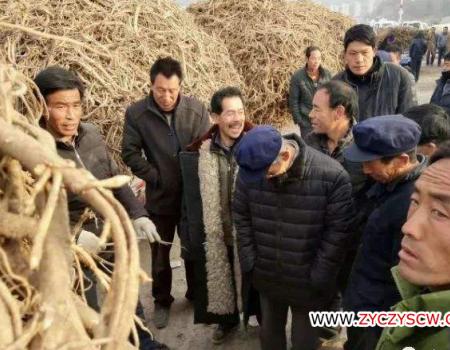 甘肃岷县产地市场黄芪、当归、党参最新资讯