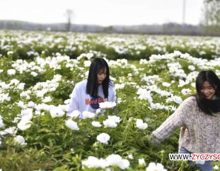 十大牡丹欣赏地 看看亳州谯城排第几?